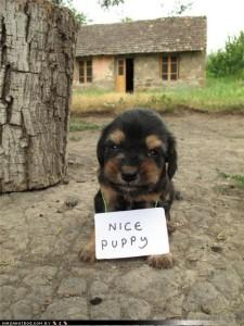 Самореклама на примере щенка